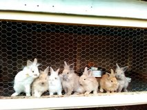 Bunnies in Camp Lejeune, North Carolina