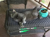 Sweet Male Cat in Leesville, Louisiana