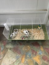 two mini Rex bunnies with cage an food in Leesville, Louisiana