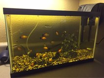 20 gallon tank with fish in Oceanside, California