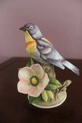 Vintage Parula Warbler by Andrea 8627 in Perry, Georgia