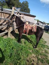 Horse 4 Sale in Travis AFB, California