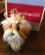 American Girl Yorkie dog Sugar in Shorewood, Illinois
