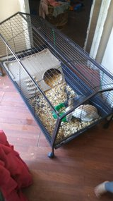 Two bunnies and cage in Lawton, Oklahoma
