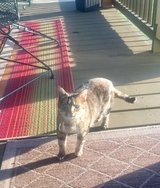 Found Cat in Fort Campbell, Kentucky