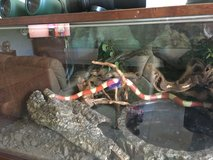 Milk Snake With Great Aquarium PPU in Ramstein, Germany