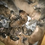 Puppies in bookoo, US