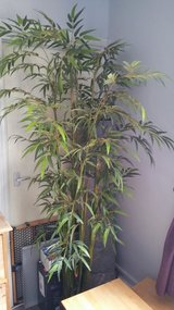 Artificial Plant 6ft tall in Cambridge, UK