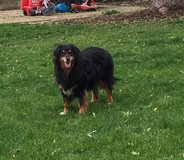 Wonderful family dog in bookoo, US
