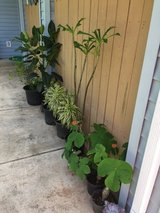 Plants and succulents in Schofield Barracks, Hawaii