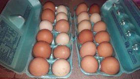 For sale dozen eggs in Kingwood, Texas