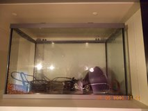 Reptile Filter, Heat Lamp, Fish Tank with Lid in Grafenwoehr, GE