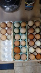 Chicken Eggs - free range - Discount if you bring an empty carton to exchange in Warner Robins, Georgia