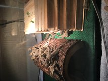 Baby bearded dragons needing forever home ! in bookoo, US