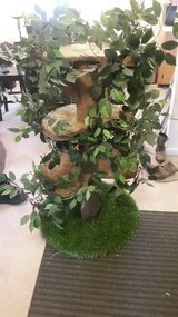 Cat tree in Fort Campbell, Kentucky