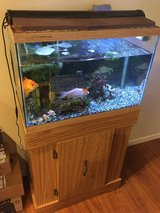 Aquarium 20 gallon with two gold fish. in Fort Lewis, Washington