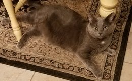 2 male, 5 yr old cats, both fixed in Luke AFB, Arizona