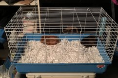 Guinea pigs - 2 with cage and supplies in Bolingbrook, Illinois