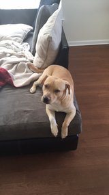 need to rehome pup in Camp Lejeune, North Carolina