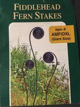 Fiddlehead Fern Stakes in Oswego, Illinois