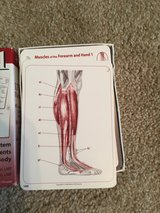 Anatomy and physiology flash cards volume 1&2 in Camp Lejeune, North Carolina