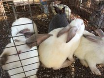 Rabbits in DeRidder, Louisiana