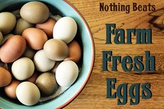 Farm fresh eggs in Fort Campbell, Kentucky