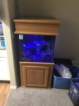 60g saltwater setup in Colorado Springs, Colorado