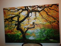 Large framed Banyan tree print in Travis AFB, California