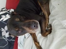 Duke needs a home in Temecula, California