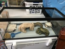 Reptile Cage/Setup in San Clemente, California