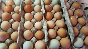 Fresh Organic farm eggs in Naperville, Illinois