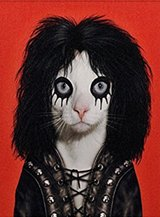 Alice Cooper Pets Rock Canvas Art in Fort Irwin, California