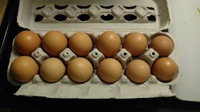 Farm Fresh Eggs in Conroe, Texas