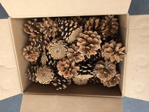 110 Pine cones in Bolingbrook, Illinois