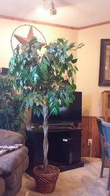 Artificial house plant in Fort Riley, Kansas
