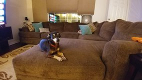 Meet Dozer in Vista, California