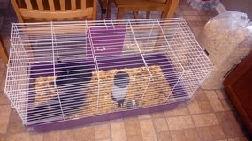Have bunnys with cages and food in Fort Campbell, Kentucky