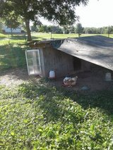 Hens and house in Fort Campbell, Kentucky