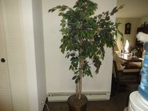 INDOOR TREE in Naperville, Illinois