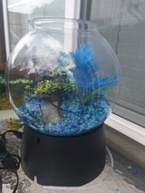 2 gallon fish tank with accessories in Vista, California