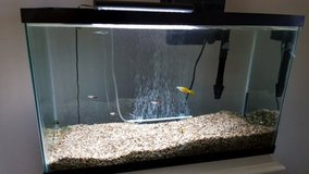 29 gallon fish tank with 10 small fish. Must go by June 17th! in Vista, California