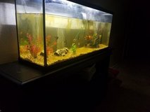 50 Gallon Fish tank with All accessories in Vista, California