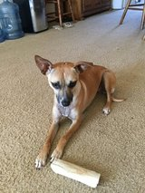 Sweet Maggie in Travis AFB, California