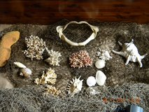 Aquarium Decor.....Coral, Shells, and 2 Nets in Kingwood, Texas