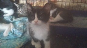 Cute Kittens in Yucca Valley, California