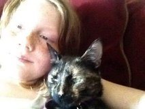 MISSING CAT PLEASE HELP in Fort Carson, Colorado