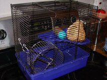 hamter cage with wheel, chelf, ramp and water bottle in Colorado Springs, Colorado