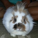 Miss Jingles needs a new home in Cherry Point, North Carolina