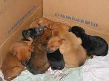 Oops, your dog had puppies! in Alamogordo, New Mexico